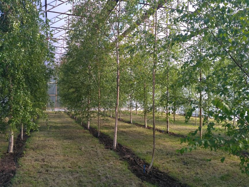 Визит делегации БГТУ в Каунасский университет прикладных наук лесного хозяйства и инженерии окружающей среды
